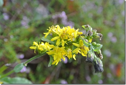 Traumpfad Eltzer Burgpanorama - Blume