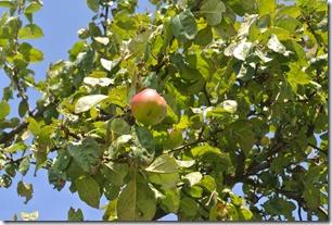 Traumpfad Eltzer Burgpanorama - Apfel