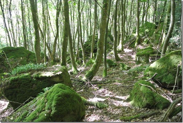 NaturWanderPark delux: Felsenweg 2 - Bemosst Felsen