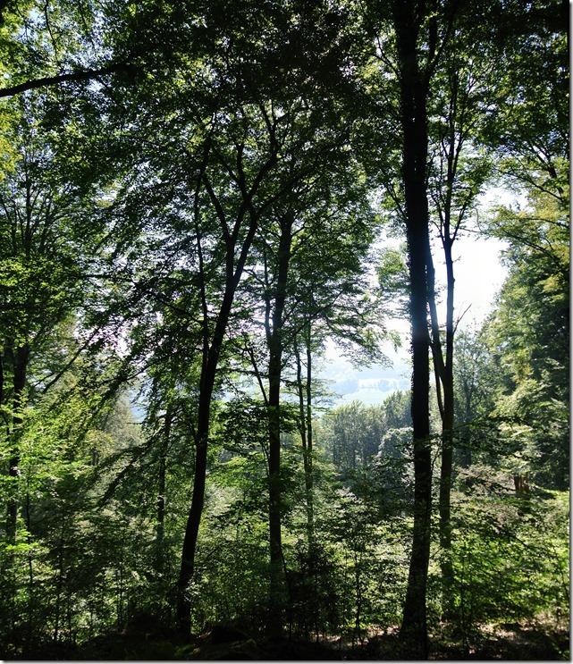 NaturWanderPark delux: Felsenweg 2 - Blick ins Tal
