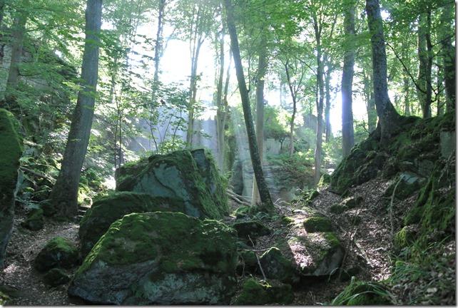 NaturWanderPark delux: Felsenweg 2 - Wald, Felsen und Licht