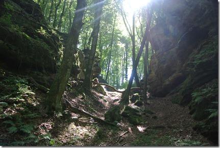 Lichtspiel mit Fels und Wald