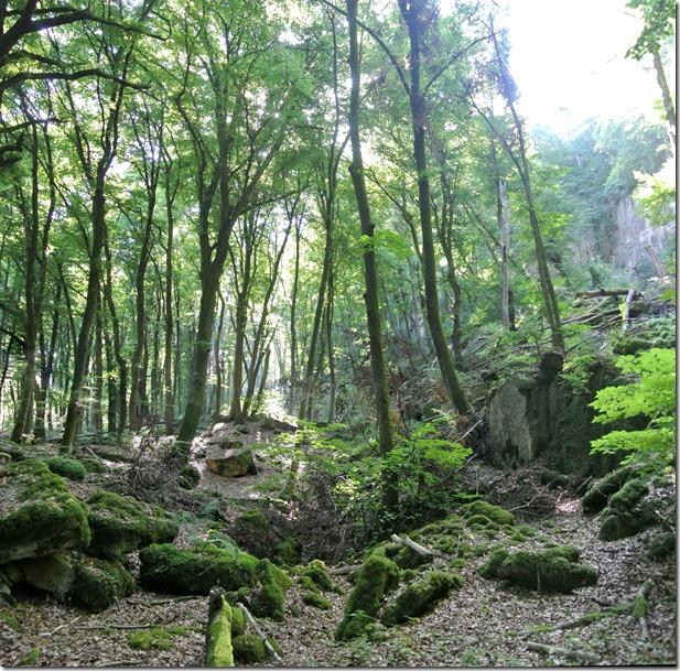 Rundwanderweg R8 - Felsenlandschaft nahe Streinheim