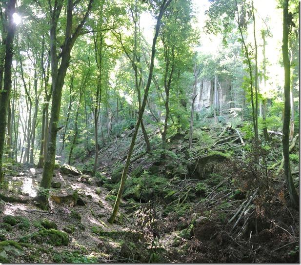 Rundwanderweg R8 - Felsen, Wald & Licht