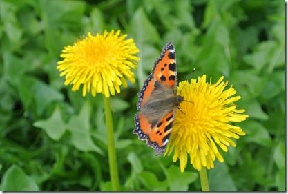 Traumpfad Höhlen-Schluchtensteig - Schmetterling