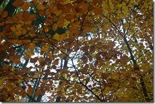 Traumpfad Heidehimmel - Herbstlaub