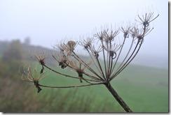Traumpfad Heidehimmel - Herbstimpression