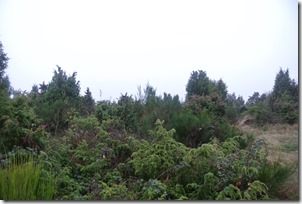 Traumpfad Heidehimmel - Heidelandschaft