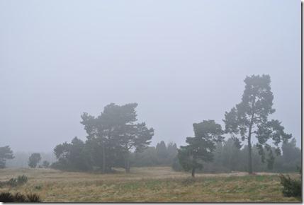 Traumpfad Heidehimmel - Nebelschwaden über der Heide