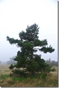 Traumpfad Heidehimmel - Baum in Heidelandschaft