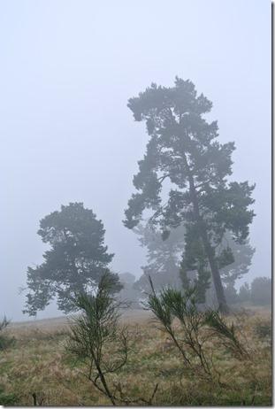 Traumpfad Heidehimmel - Nebel & Heide