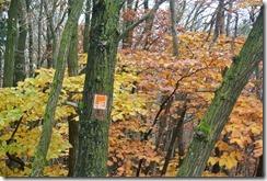 Traumpfad Heidehimmel - Wegmarkierung vor Herbstlaub