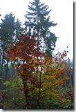 Traumpfad Heidehimmel - Herbst im Wald
