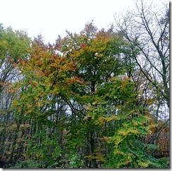 Traumschleife Rabenlay - Herbstwald