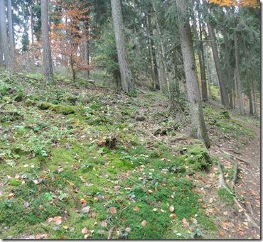 Traumschleife Rabenlay - Waldstück