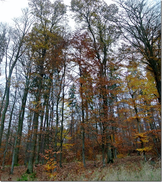 Traumschleife Rabenlay - Herbstlicher Wald