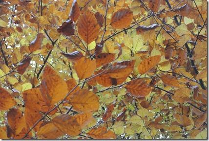 Traumschleife Rabenlay - Herbstlaub