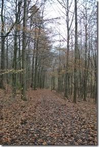 Wäller Tour Iserbachschleife - Herbstwald