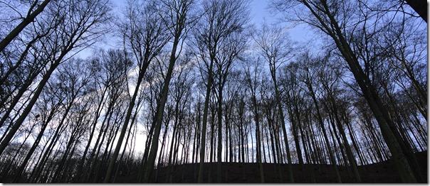 Traumpfad Booser Doppelmaar - Wald