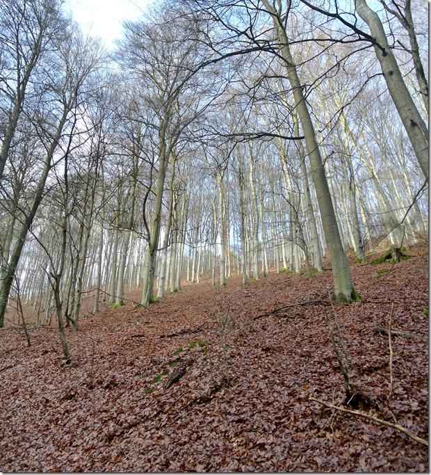 Traumpfad Bergheidenweg - Schluchtental Selbach