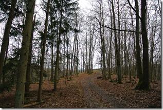 Wäller Tour Eisenbachtal - Waldweg