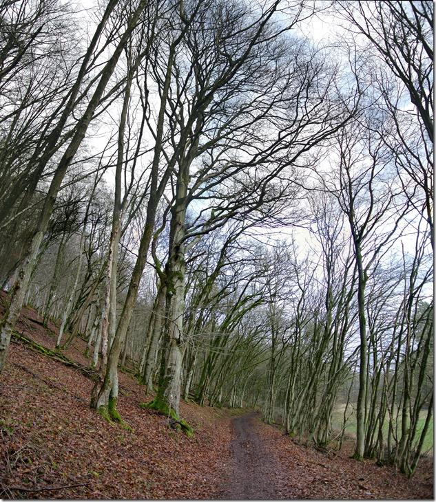 Wäller Tour Eisenbachtal - Weg entlang des Eisenbachs