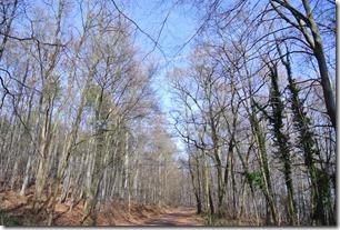 Traumpfad Vulkanpfad - Waldweg