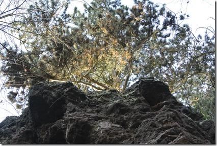 Traumpfad Vulkanpfad - Blick nach oben