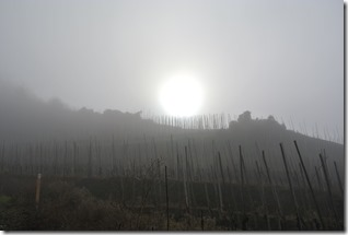 Moselsteig Etappe 18 - Sonne und Nebel im Weinberg