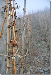 Moselsteig Etappe 18 - Weinstöcke im Nebel
