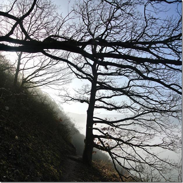 Moselsteig Etappe 18 - Baumsiluette im Nebel