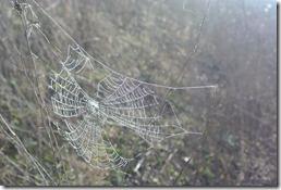 Moselsteig Etappe 18 - Spinnennetz mit Nebeltau