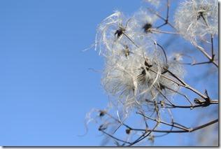 Moselsteig Etappe 18 - Pflanzen & Himmel