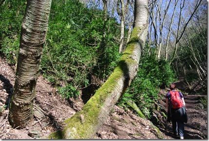 Moselsteig Etappe 18 - Aufstieg im Kabainertal