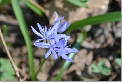 Moselsteig Etappe 18 - Blüten am Wegesrand