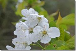 Alter Weinbergweg Bad Breisig - noch mehr Blüten