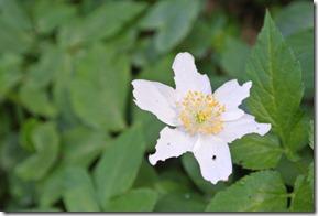 Rheinsteig Vallendar-Ehrenbereitstein - Der Frühling ist da