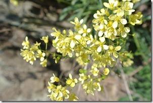 Moselsteig Etappe 19.2 - Blüten am Wegesrand