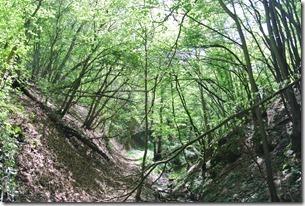 Moselsteig Etappe 19.2 - Stimmungsvoller Schilzergraben