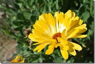 Moselsteig Etappe 19.2 - Blumen im Weinberg