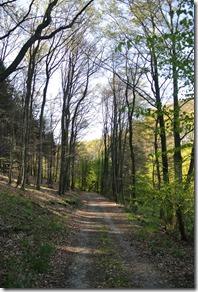 Wäller Tour Iserbachschleife - Waldweg im Morgenlicht