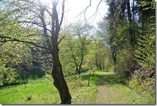 Wäller Tour Iserbachschleife - Talweg zur Mühle