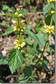 Moselsteig Etappe 23 - Gelbe Blüten