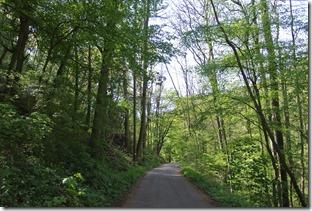 Moselsteig Etappe 23 - Waldweg