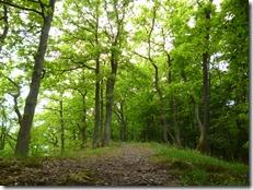 Moselsteig Etappe Reil - Zell (Mosel) - Waldweg