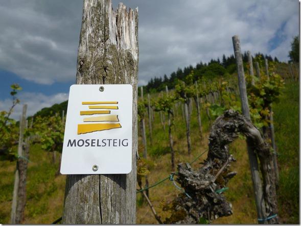 Moselsteig Traben-Trarbach - Reil - Mit dem Moselsteig durch die Weinberge