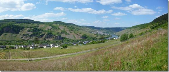 Moselsteig Traben-Trarbach - Reil - Panorama der Mosel mit Burg und Reil