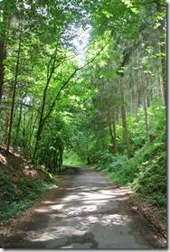Rheinsteig Sayn - Vallendar - Waldweg