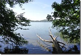 Laacher See: Geopfad L - See und Baum