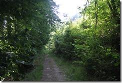 Traumpfad Waldschluchtenweg - Waldweg